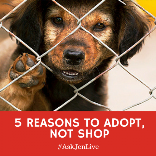5 reasons to adopt not shop