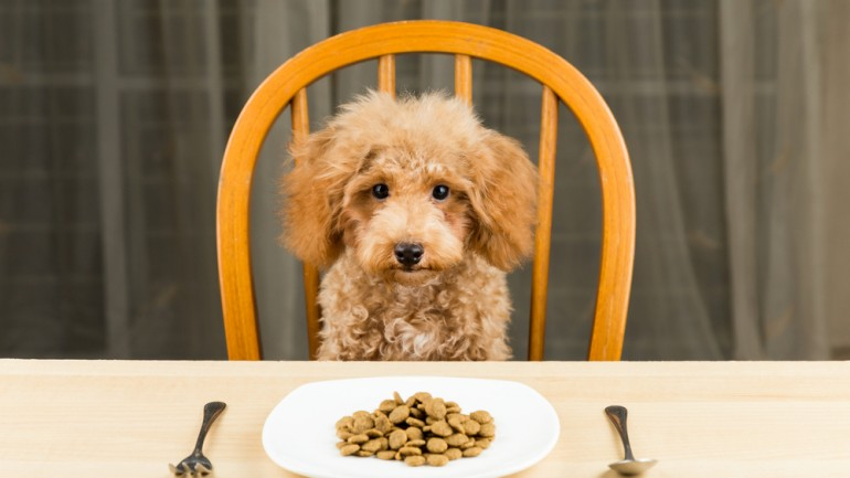 Tips For Avoid Dangerous Foods For Your Pets